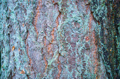 Bark, Tree, Wood, Texture, Old, Rough, Surface, Trunk