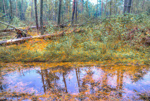 Pool, Water, Forest, Mud, Wet, Outdoor, Woods, Autumn