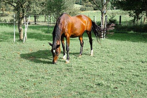 Horses, Mold, Eye, Monteaura, Equestrian, Autumn