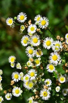 Wildflowers, Bee, Summer