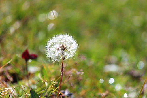 Flower, Nature, Happy, Bloom, Blossom, Biological