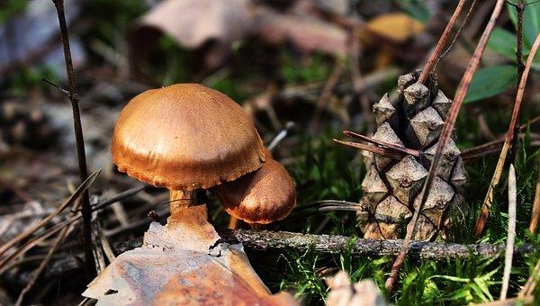 Nature, Mushrooms, Forest, Autumn, Wild, Brown