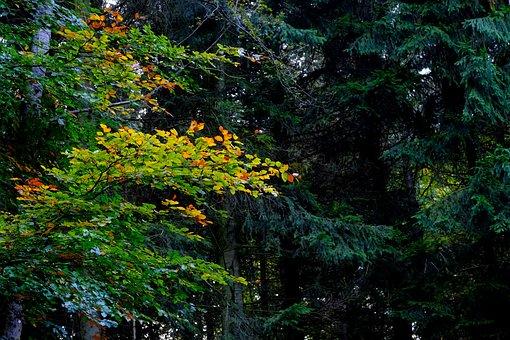 Deciduous Tree, Landscape, Contrast, Colorful, Green