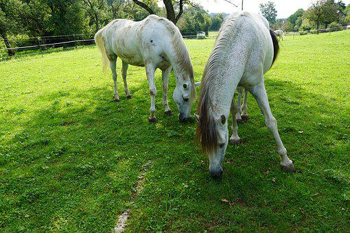 Horses, Eye, Monteaura, Equestrian, Autumn, Gallop