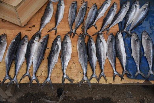 Fish, Seafood Market, Market, Trafficking, Animal