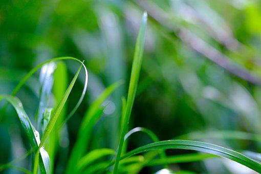 Grass, Blades Of Grass, Nature, Grasses, Meadow, Green