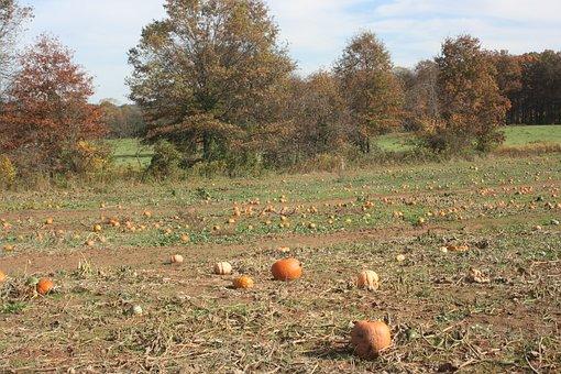 Pumpkin, Patch, Field, Autumn, Fall, Harvest, Orange