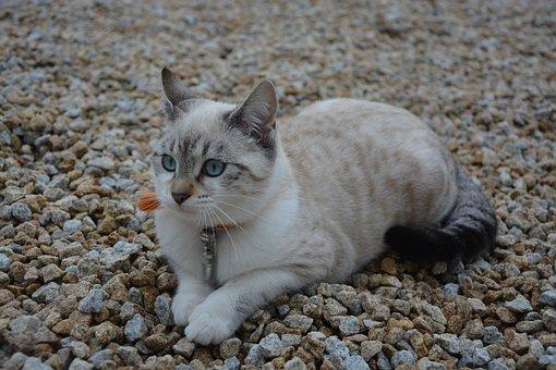 Kitten, Cat, Female, Cat Eyes, Blue Eyes Ask Ground
