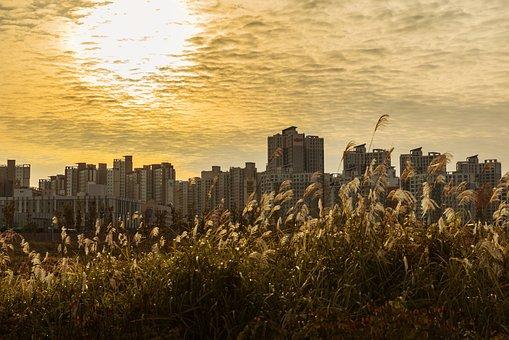 Korea, Republic Of Korea, Gyeonggi Do, Sf, Echo Park
