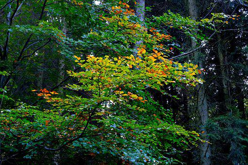 Branch, Deciduous Tree, Leaves, Nature, Forest, Autumn