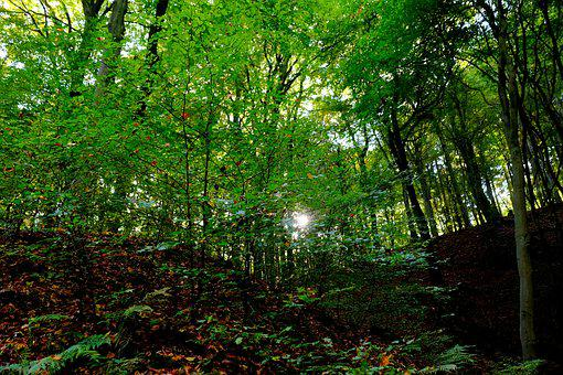 Forest, Trees, Nature, Landscape, Sunlight, Leaves, Log