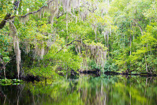 Nature, Creek, Florida, Wild, Swamp, Landscape, Outdoor