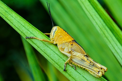 Insect, Paddy, Green, Nature, Food, Field, Animal, Rice