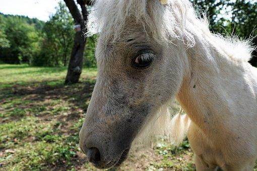 Pony, Horse, White, Mold, Animal, Pasture, Nature