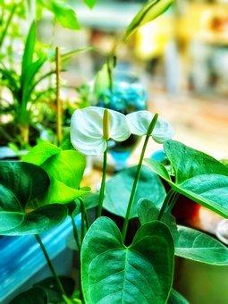 Plant, The White Hand, White, Green