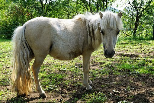 Pony, Horses, Mold, Eye, Monteaura, Equestrian, Autumn