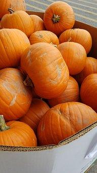 Pumpkins, Pumpkin, Orange, Halloween, Autumn, Fall