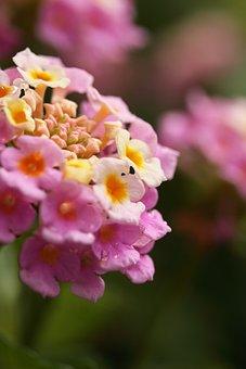 Flower, Fresh, Summer, Spring Flowers, Detail, Texture