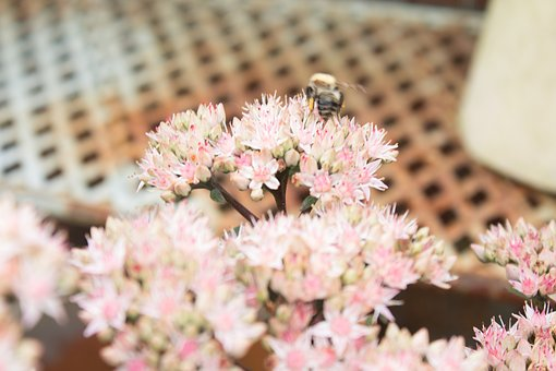 Summers Day, Bee, Bee Pollinating Flowers, Summer