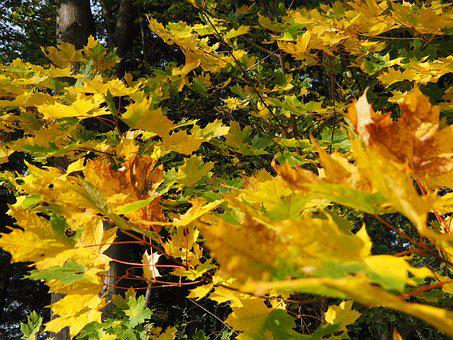 Autumn, Leaves, Mood, Color, Colorful, Nature, Austria