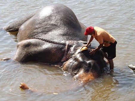 Sri Lanka, Washing, Elephant