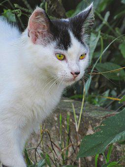 Cat, Cute, Animal, Portrait, Pet, Eye, Mammal' Predator