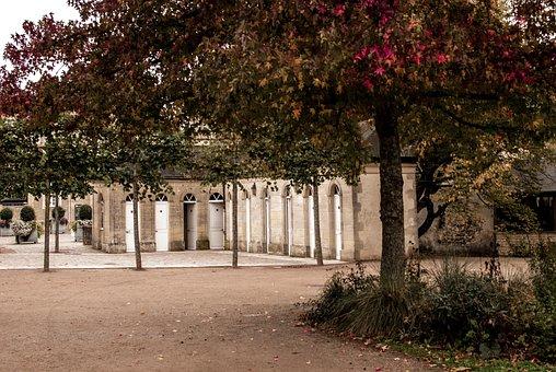 Fall, Tree, Leaf, Colors, Urban, Landscape