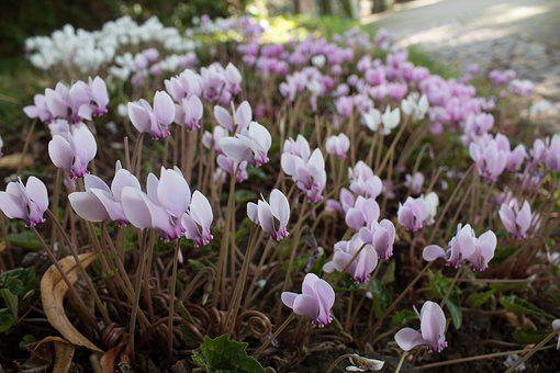 Spring, Spring Flowers, Life, Lush, New Life, Season