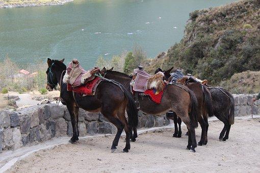 Horse, Mule, Ecuador, Quilotoa, Hiking, Animals, Laguna