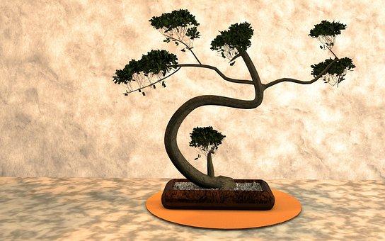 Bonsai, Plant, Harmony, Nature, Tree, Small