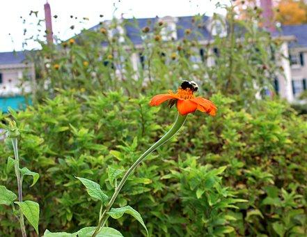 Bee, Flower, Nature, Pollination, Honeybee, Pollinating