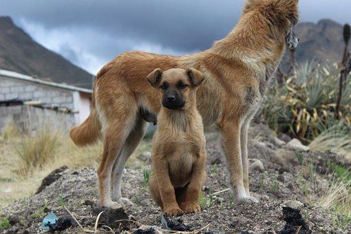 Dog, Puppy, Animal, Pet, Bitch, Animals, Cute, Male