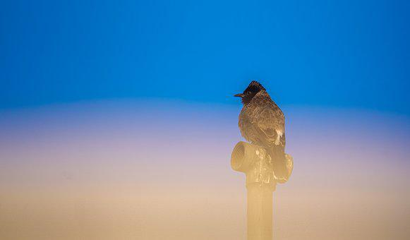 Deep Thinking, Red Vented Bulbul, Relax