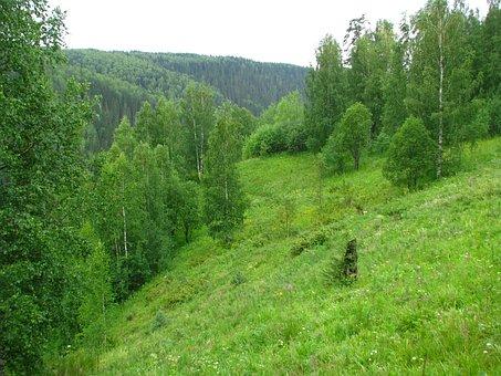 Forest, Summer, Sun, Nature, Grass, Fringe, Tree, River