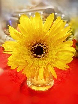 Sunflower, Flower, Pot, Yellow