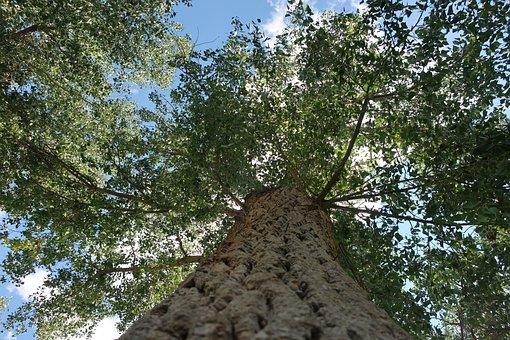 Tree, Park, Sky, Bark, Leaves