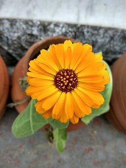 Yellow Flower, Flower, Yellow, Vishal, Vishal Kumar