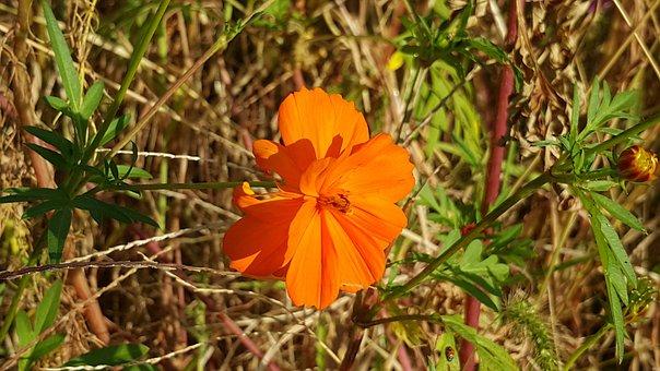 Flowers, Wildflower