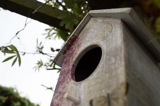 Bird House, Bird Box, Garden, Gardening, Wildlife