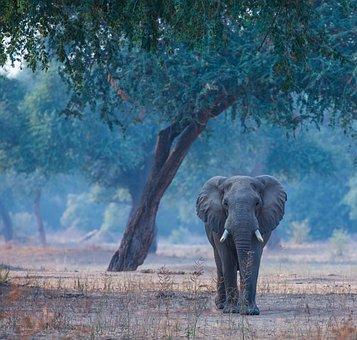 Elephant, Manapools, Wildlife, Nature