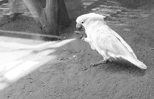 White, Parrot, Animal, Bird, Nature, Exotic, Pet