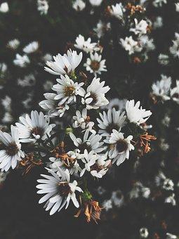 Flower, Nature, Daisy, Tiny, Autumn, Fall, Leaves