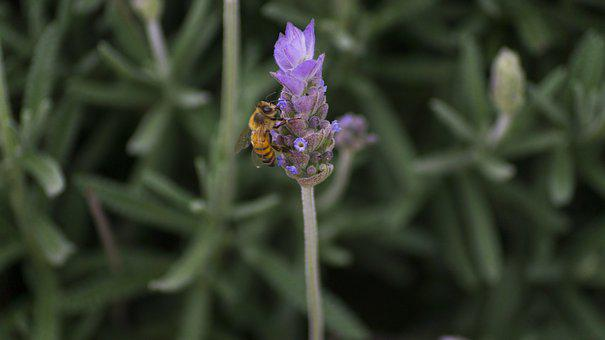 Flower, Bee, Insect, Nature, Honey, Garden, Green
