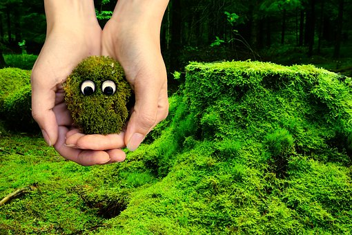 Moss, Ecology, Environment, Protection, Live, Alive