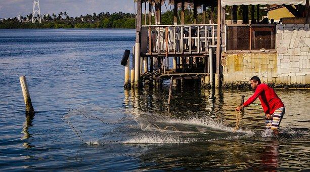 Fisherman, Fishing, Network, Fishermen, Boat, Fishery