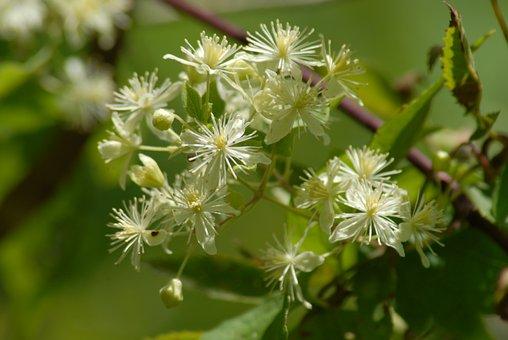 Flower, Regional Flora, Nature