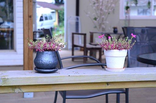 Flowers, Potted Plant, Bonsai, Plants, Flower