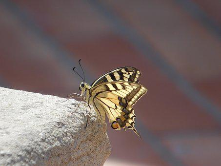 Butterfly, Insect, Nature, Animal, Fly, Wild, Summer