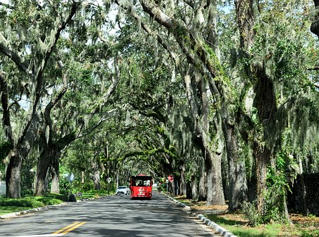 Magnolia Street, Famous, Historic, Spanish Moss, Shaded