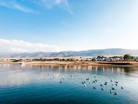 Qinghai Lake, Lake, Mountains And Rivers, Water Birds